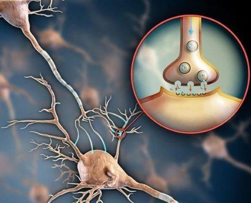 آیا عمل اسلیو معده تاثیری بر روی مغز بیمار دارد؟