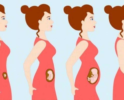 بعد از انجام عمل اسلیو معده می شود باردار شد؟
