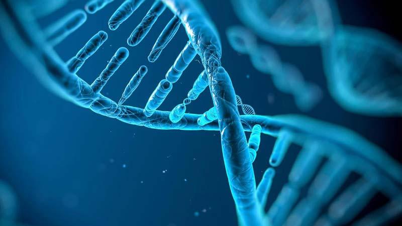 آیا با ژن ها آشنایی دارید؟