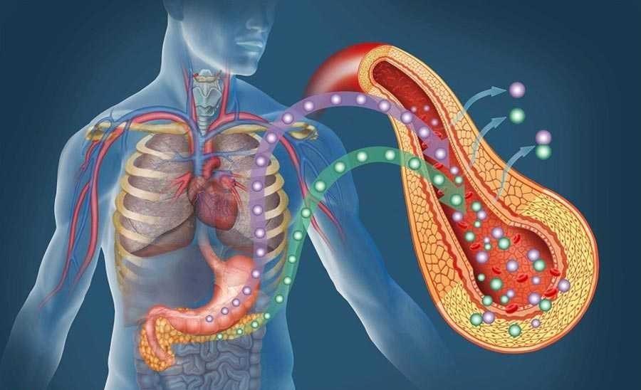 حفظ عملکرد سلول های بتا در بدن