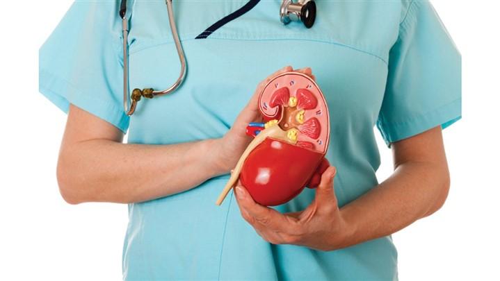 هدف اصلی egfr در آزمایش خون چیست