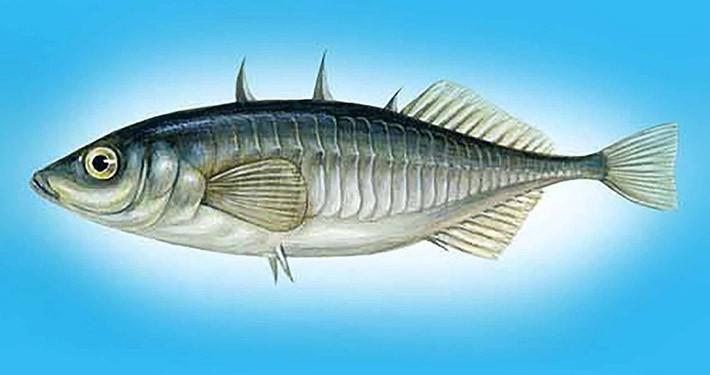 اسیدهای چرب موجود در یک وعده ماهی سالمون نوع وحشی عبارت هستند از: