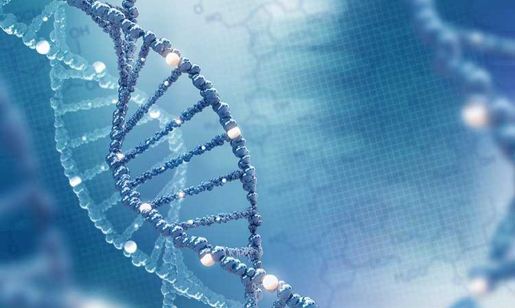آیا ژن ها در چاقی نقش دارند؟