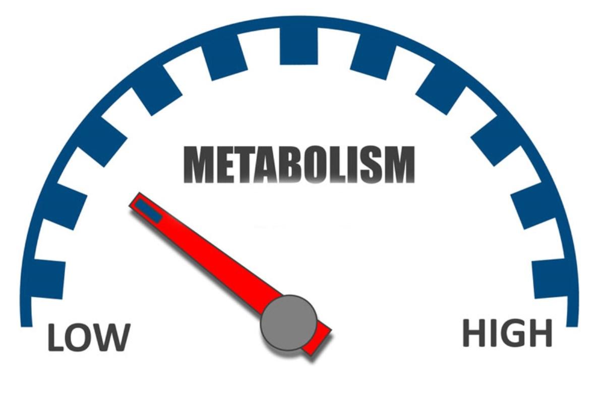 نقش این دو آنتی اکسیدان در بدن به منظور بالا رفتن سوخت و ساز بسیار زیاد میباشد
